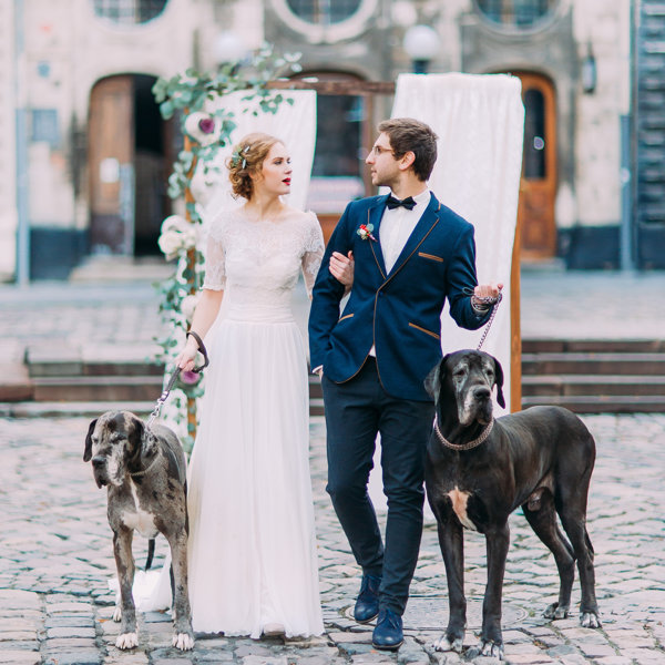 Bride & Groom with two dogs : How to include pets in your wedding ceremony.